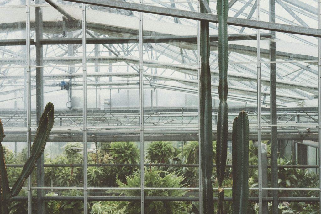 cactus au jardin botanique canada